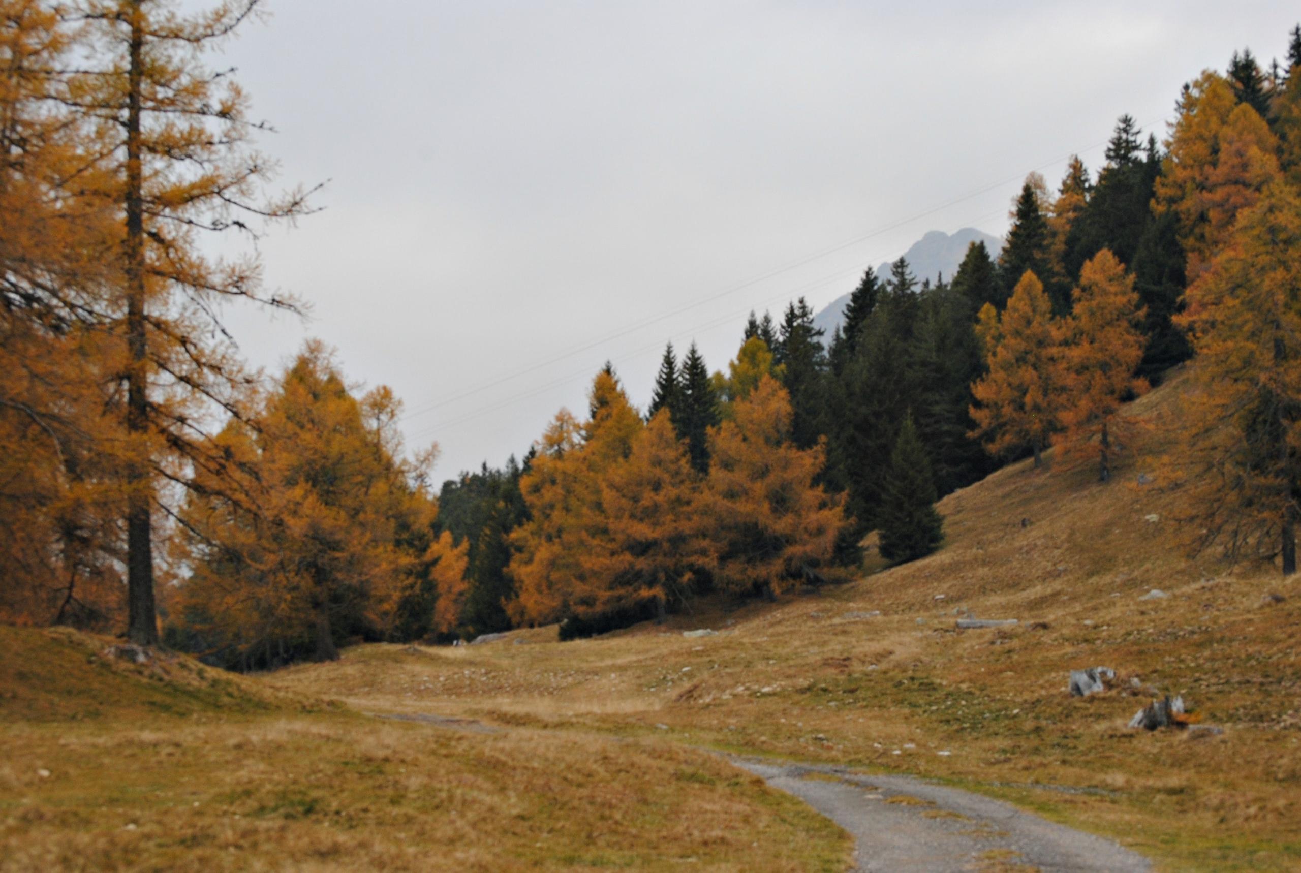 I posti migliori in Italia per ammirare il foliage
